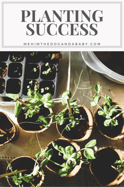 Planting Success