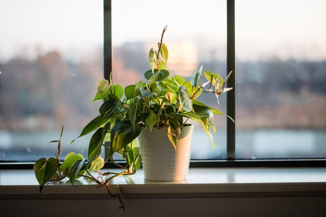Windowsill Planters