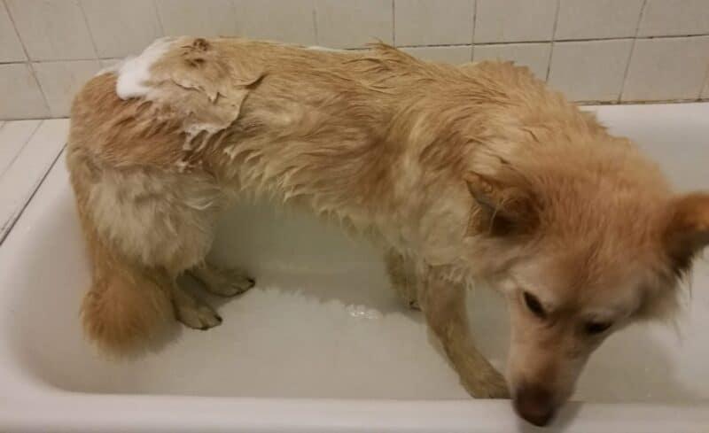 Jackson in the bath