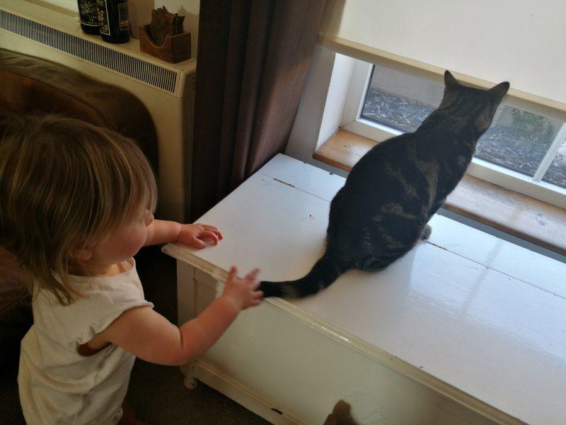 Jara The Foster Cat