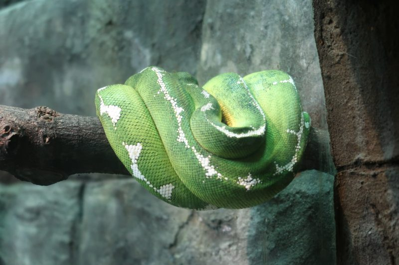 London Zoo snake