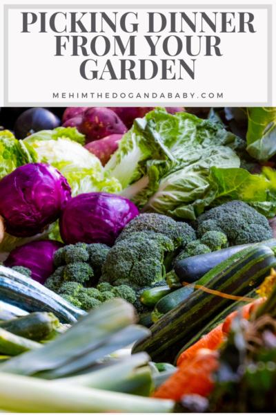 Picking Dinner From Your Garden