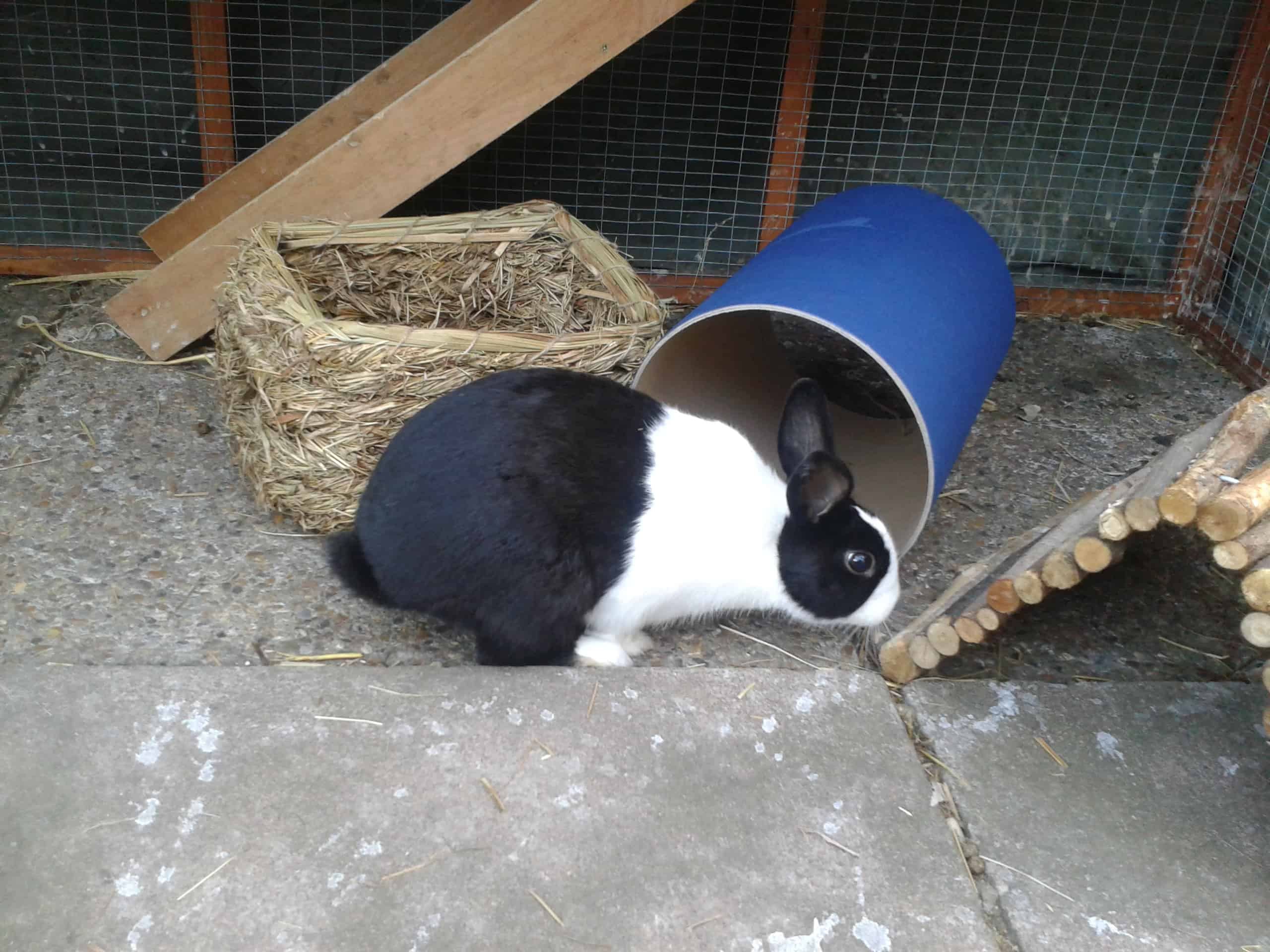 Mopsy in his hutch