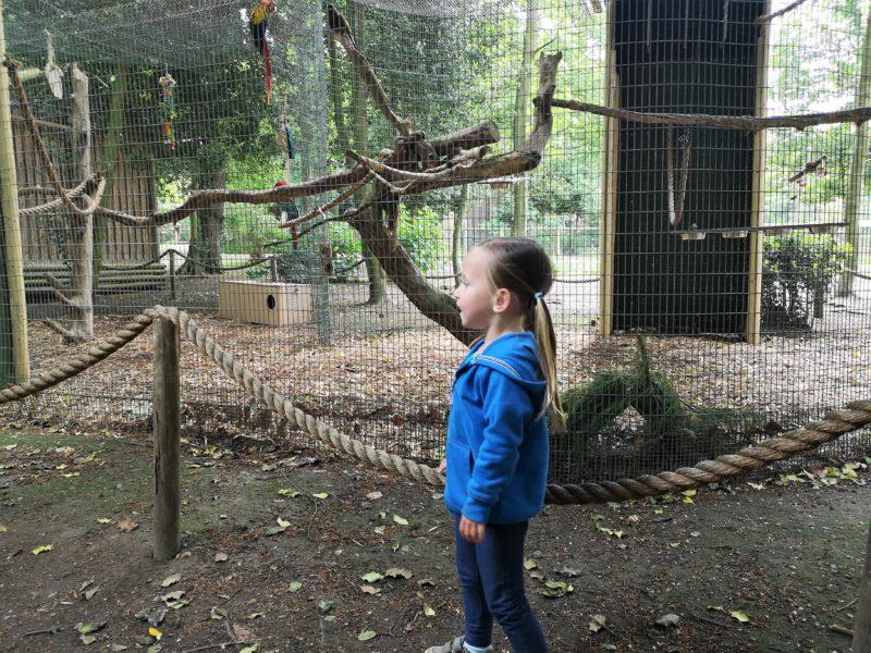 Amazona Zoo Cromer