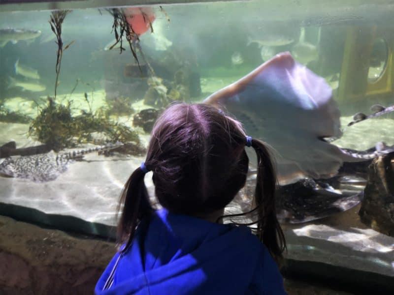 Sea Life Great Yarmouth rays