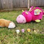 FlipaZoo World toys