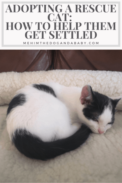 Adopting A Rescue Cat: How To Help Them Get Settled
