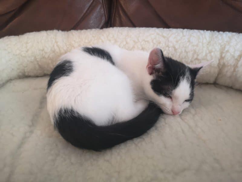 Mikki Pet snoozer bed