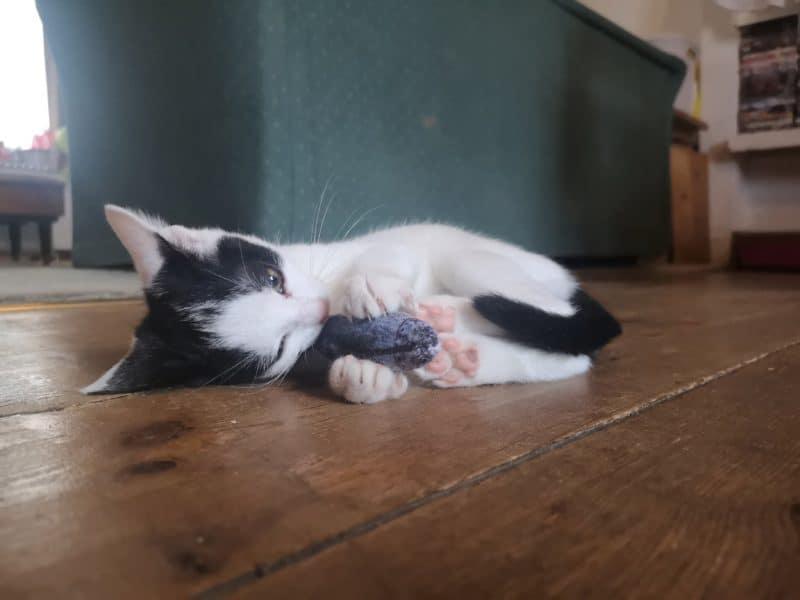 PetLove catnip filled fish toy