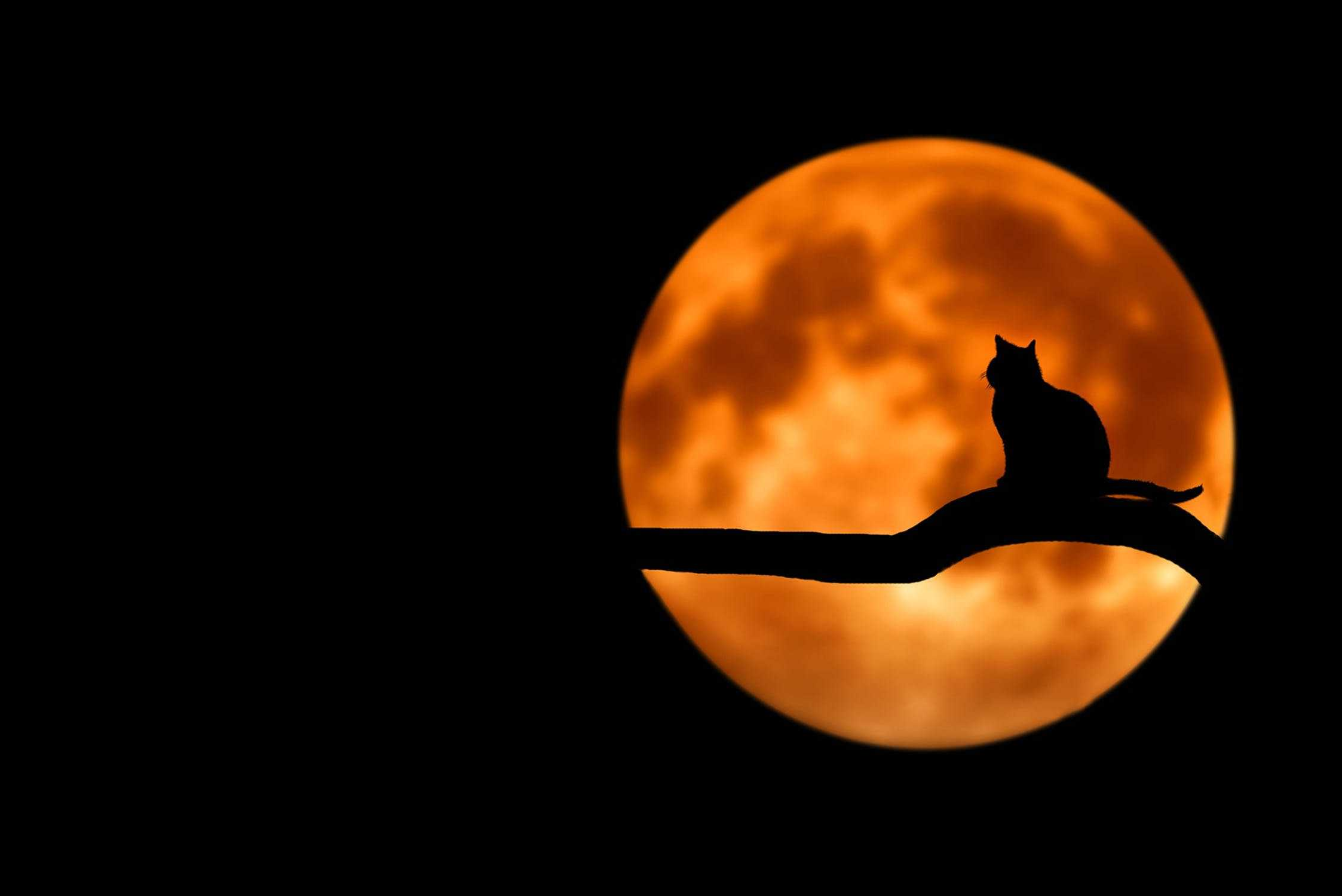 Cat in moon