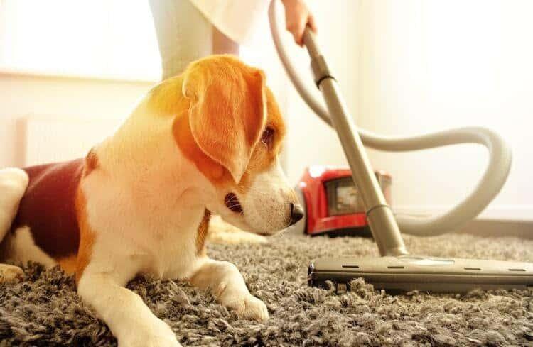 Dog with vacuum