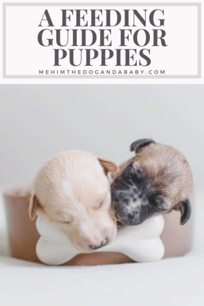 A Feeding Guide for Puppies