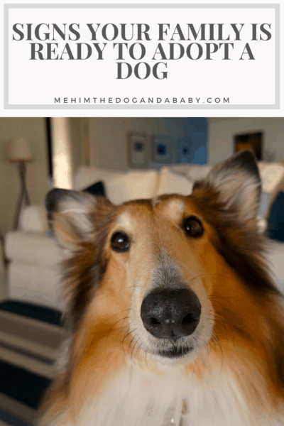 Signs Your Family is Ready to Adopt a Dog