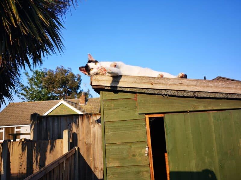 Jinx enjoying new shed