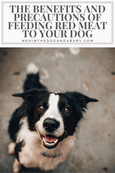 The Benefits And Precautions Of Feeding Red Meat To Your Dog