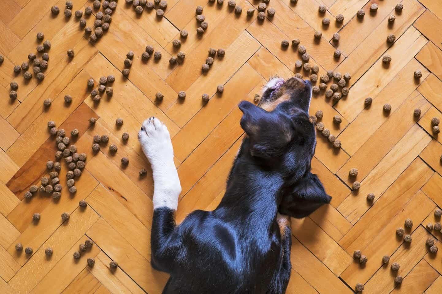 Dog eating treats