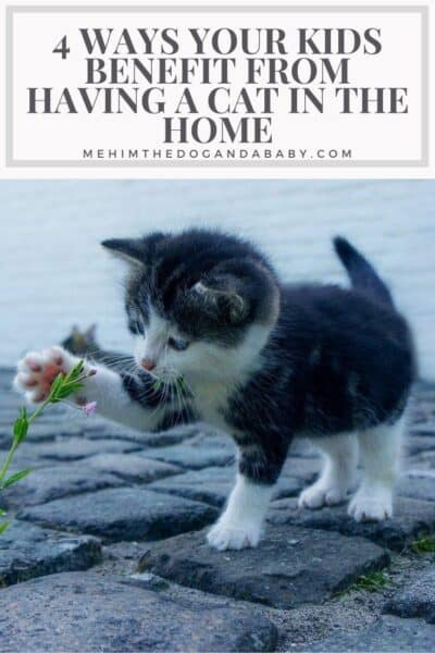 4 Ways Your Kids Benefit From Having a Cat in The Home