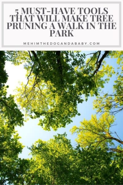 5 Must-Have Tools That Will Make Tree Pruning a Walk in the Park