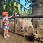 Wroxham Barns - Erin feeding animals