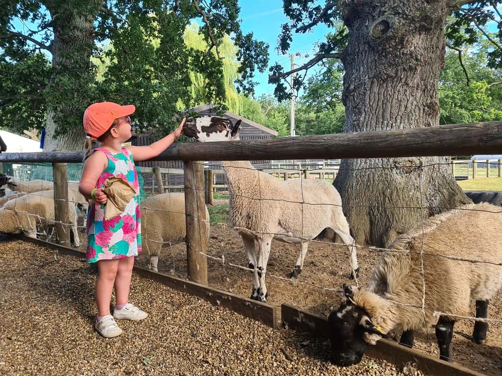 Wroxham Barns - Erin feeding animals