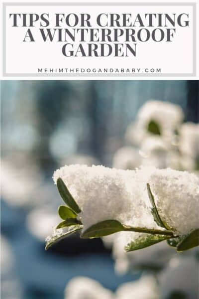 Tips for Creating a Winterproof Garden