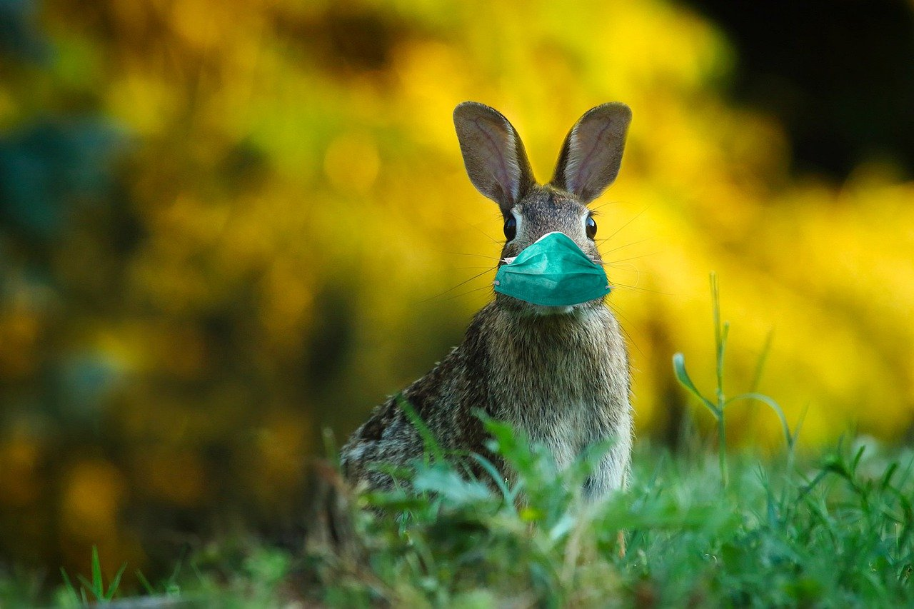 Bunny wearing a mask
