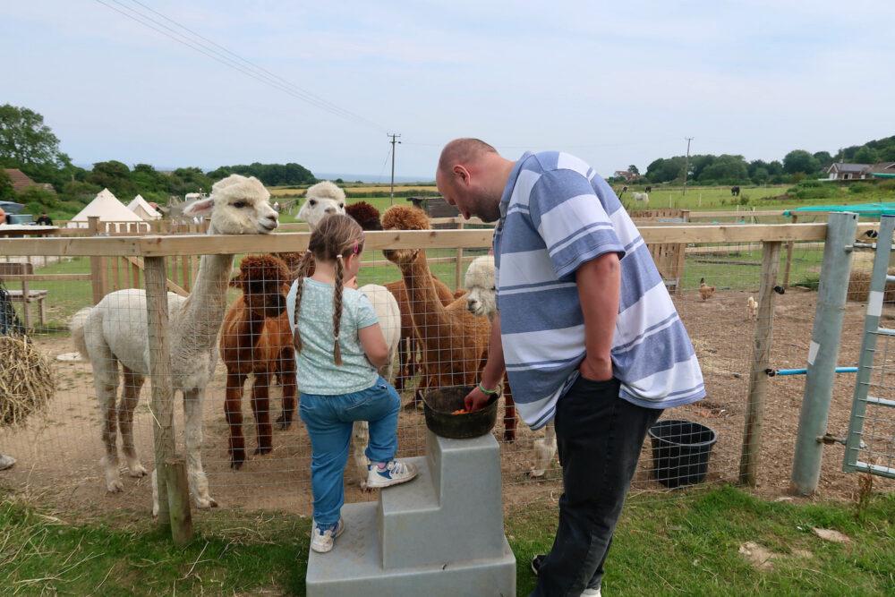 Bumblebarn John with alpacas