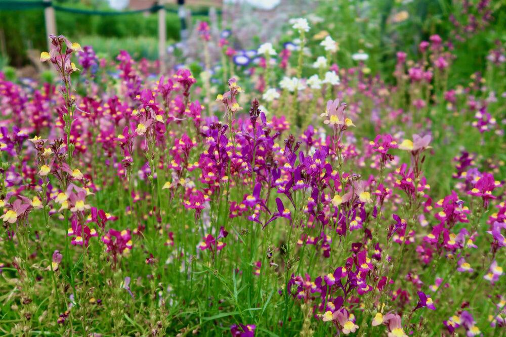 Felbrigg Hall flowers