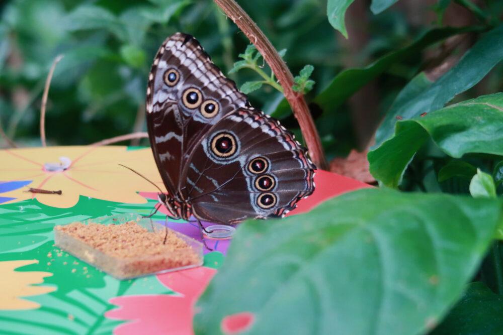 London Zoo butterfly