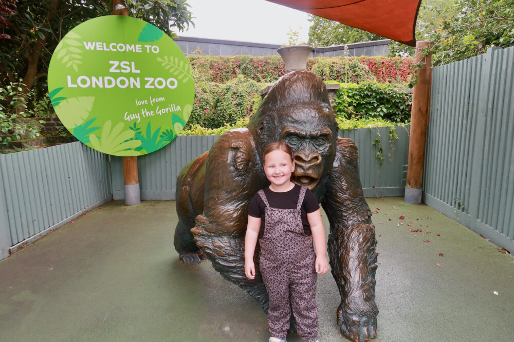 London Zoo gorilla