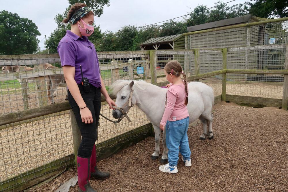Wroxham Barns pony grooming
