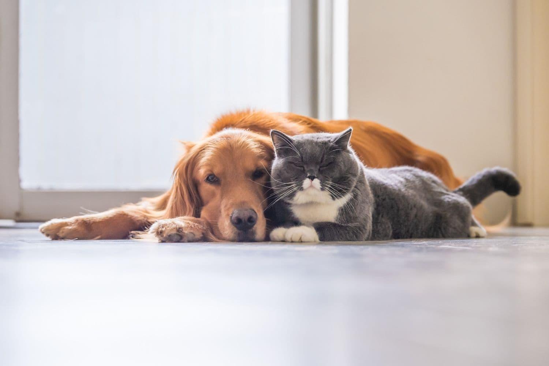 Bonfire Night 2021: How to Keep Your Pet Safe