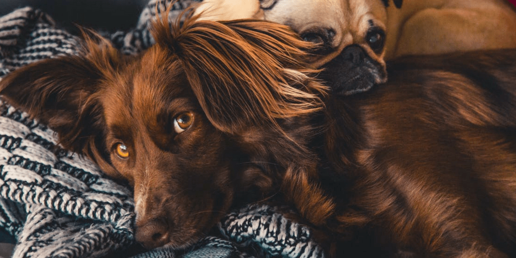 5 Ways To Keep Your Pets Happy
