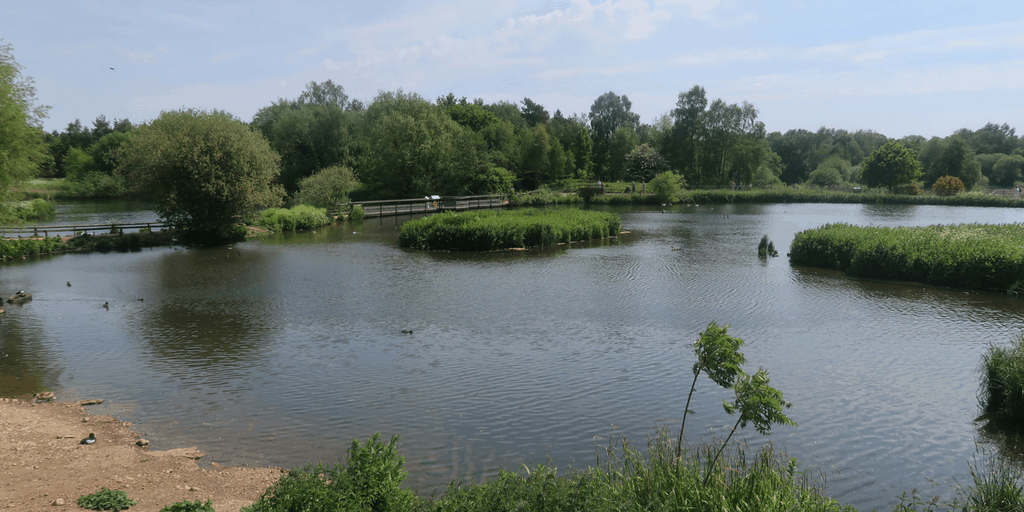 A Day Out At Pensthorpe National Park