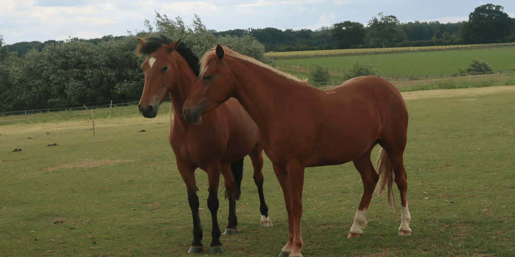 A Day Trip To Redwings Horse Sanctuary