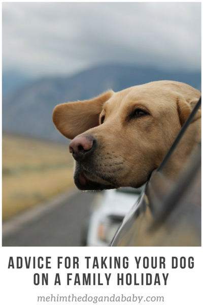 Advice For Taking Your Dog On A Family Holiday