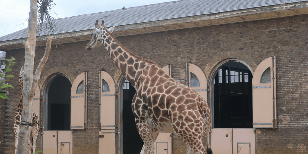 Buy A Gift Experience: London Zoo For Two Adults