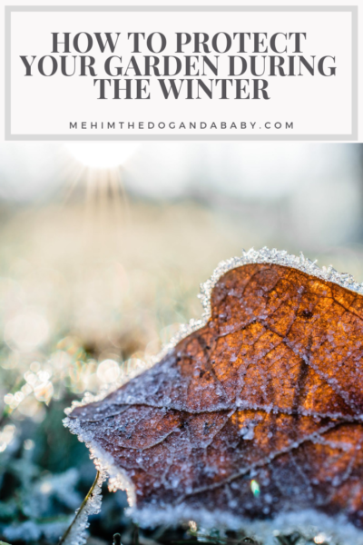 How To Protect Your Garden During The Winter