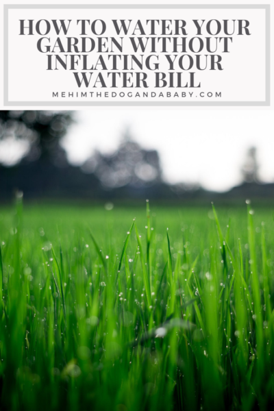 How To Water Your Garden Without Inflating Your Water Bill