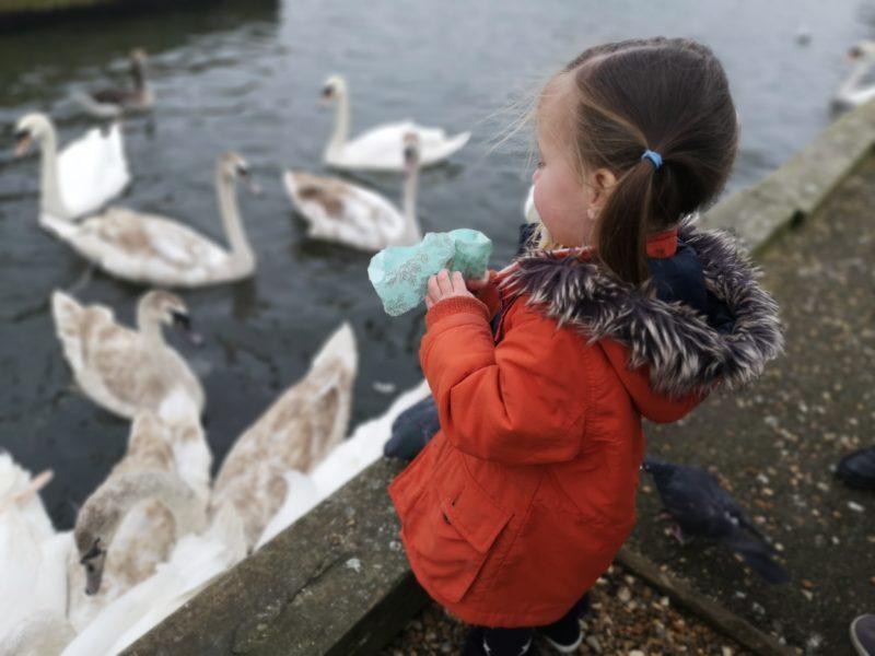 Feeding the ducks in Wroxham