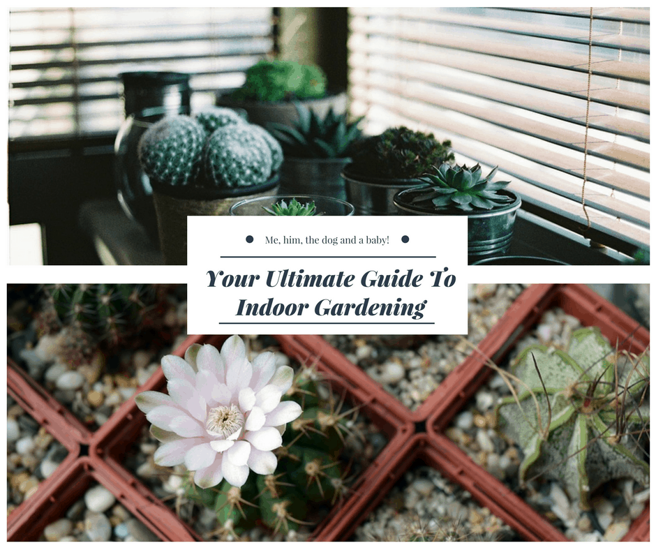Your ultimate guide to indoor gardening me him the dog for Indoor gardening pdf